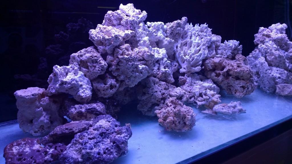 ایکویریم rockes