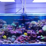 beautiful-200-gallon-using-atlantik-compacts