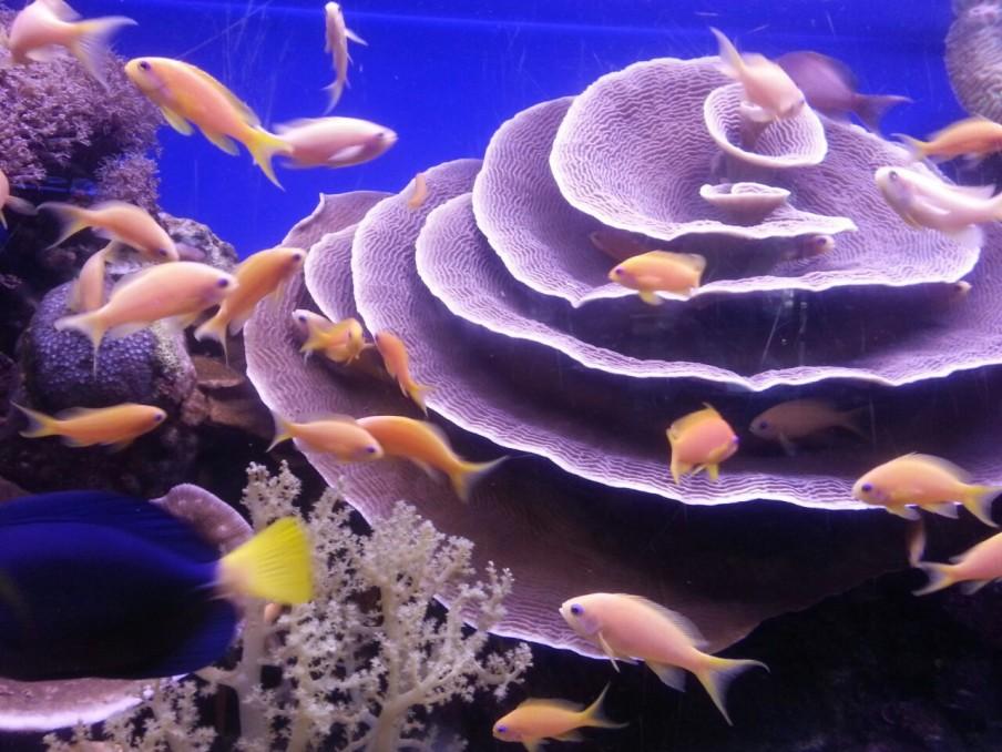 eilat-public-aquarium-israel
