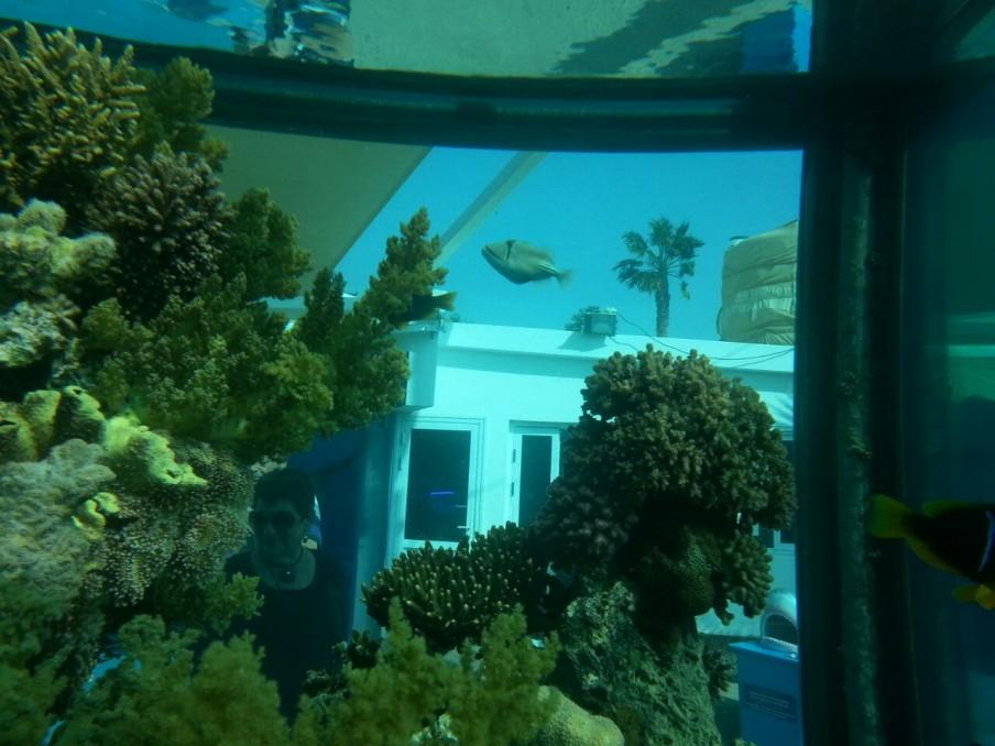 Eilat Public Aquarium Israel Orphek