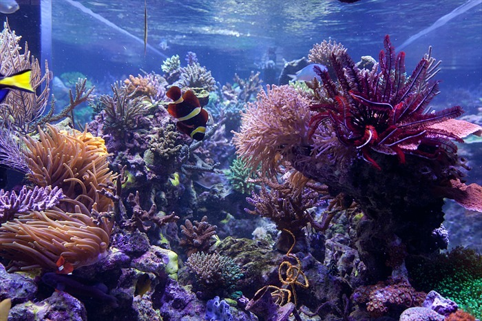 1300G- Aquarium- ਕੈਨੇਡਾ-ਪੀਟਰ