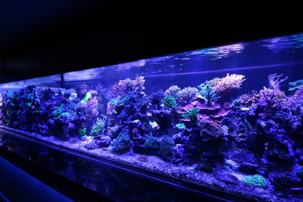 Aquarium-Led-bleu clair