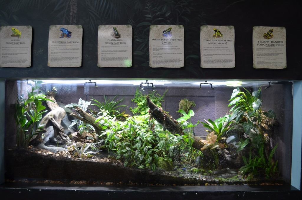 Planted freshwater public aquarium led lighting