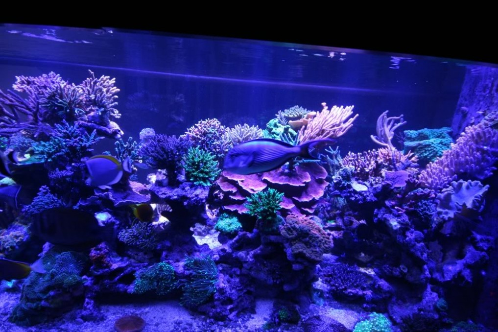 Månen-LIGHT-LED-Aquarium