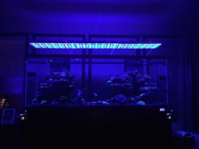 Moonlight-full-reef-tank-shot