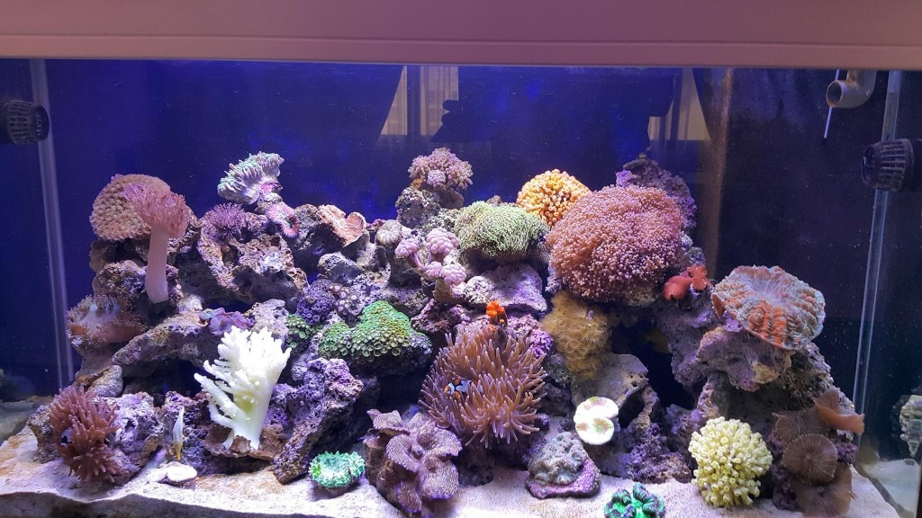 Teheran-LED-Aquarium-Light