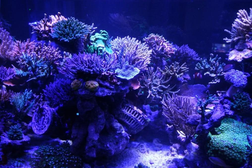 1300 gallon tank erlitt einen katastrophalen ausfall aquarium led beleuchtung orphek. Black Bedroom Furniture Sets. Home Design Ideas