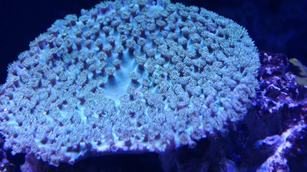 coral-blue-led-light