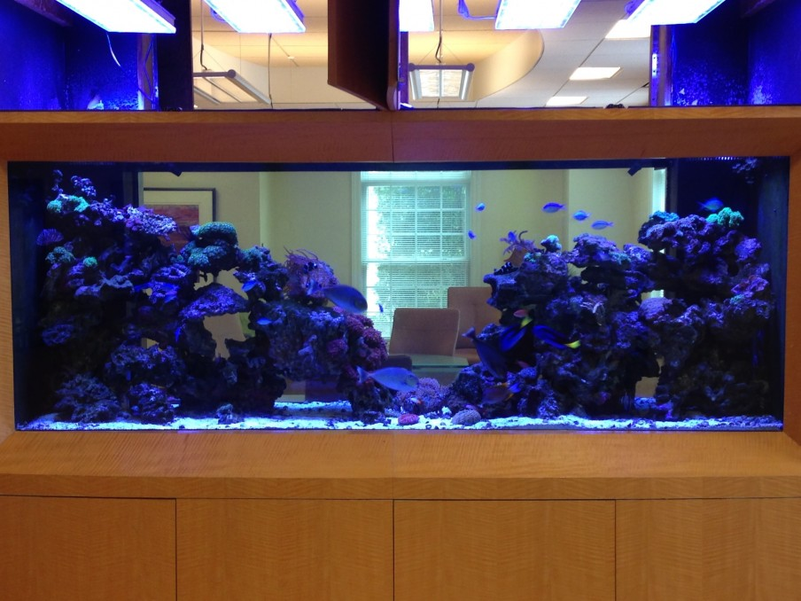 saltwater-reef-aquarium-LED-lighting