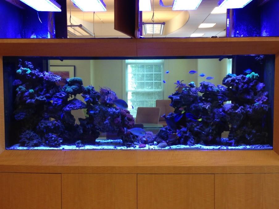 aquarium led beleuchtung fotos beste reef aquarium led beleuchtung galerie orphek. Black Bedroom Furniture Sets. Home Design Ideas
