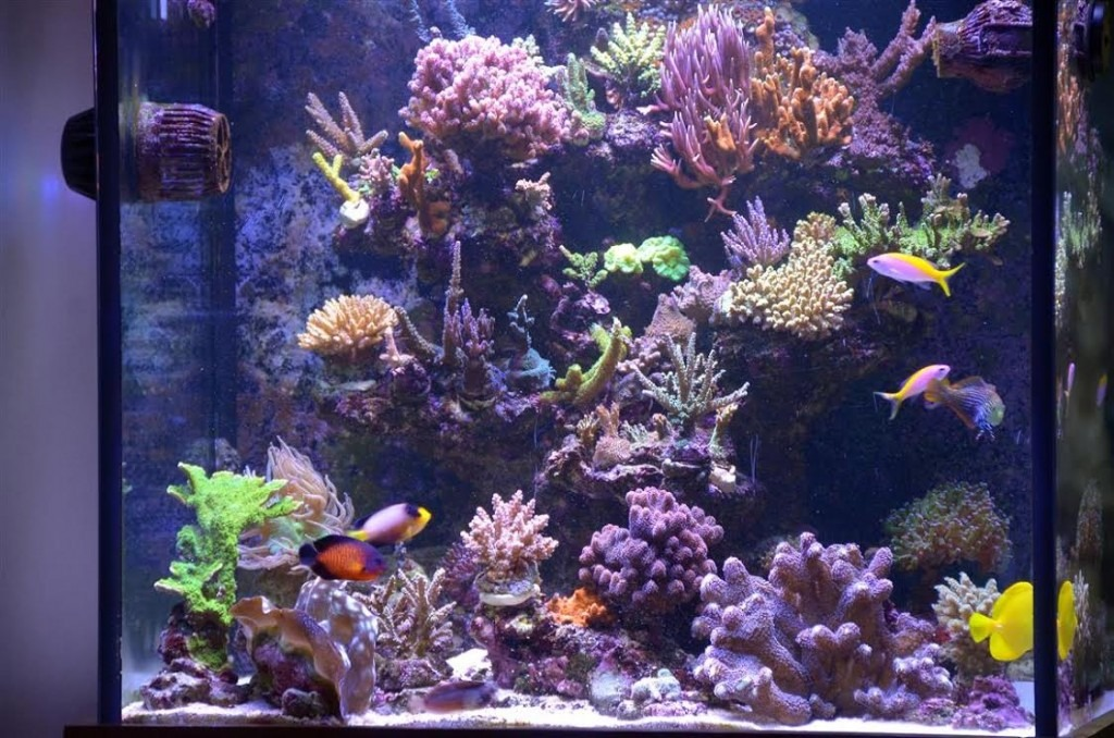 Befor-Reef-Tank-November 2014