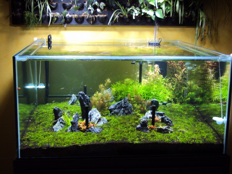 Jan 2015 Planted Tank Orphek PR 72 2 - Planted Tank lit by four Orphek PR72
