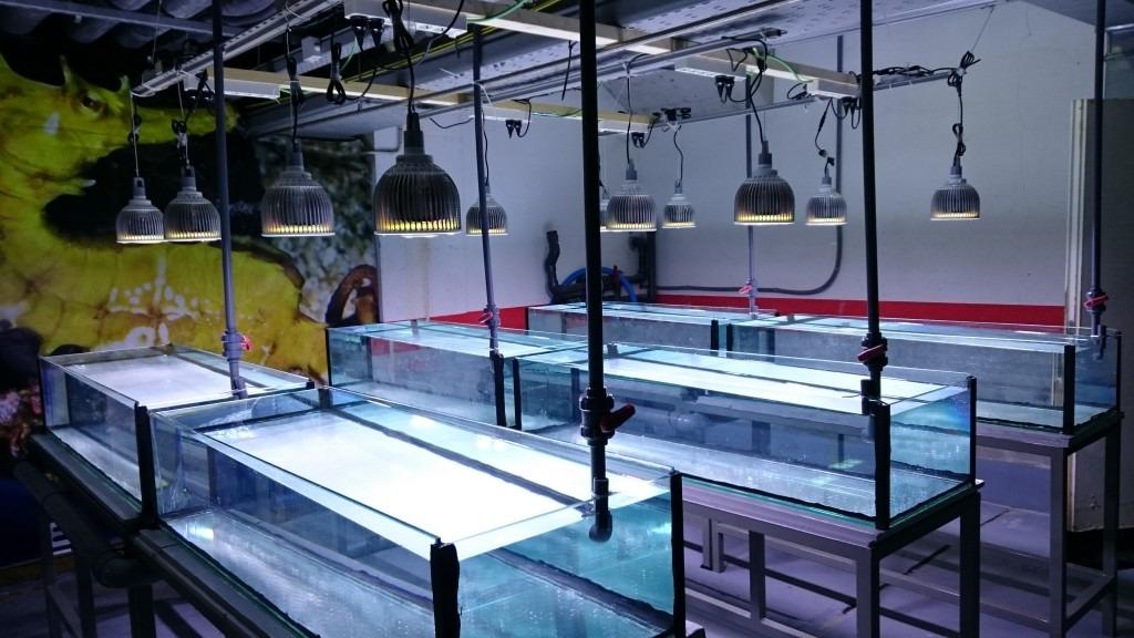 مرجان الزراعية في بالما دي maiorca-العام الحوض