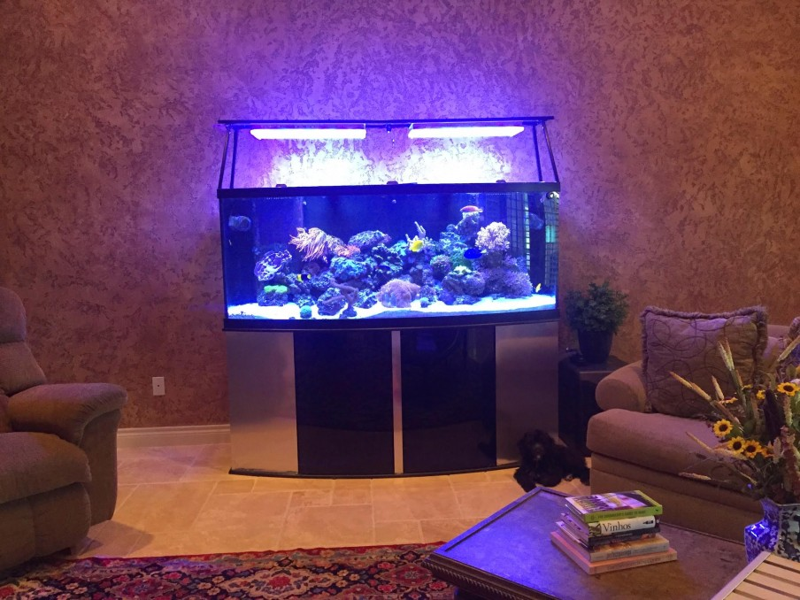 Captive_Aquatics_ Ecosystems_orphek_LED