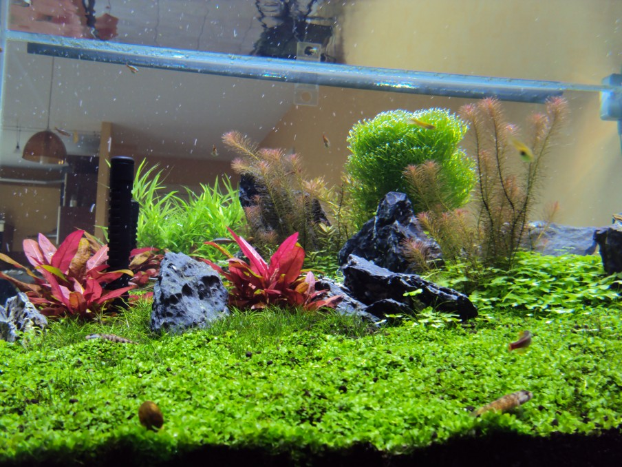 Planted-aquarium-LED-light-2015 020
