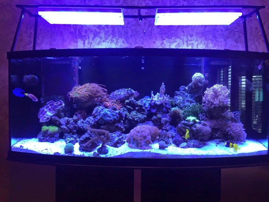 Reef_Tank_aquarium_Orphek_LED_Atlantik_v2_1