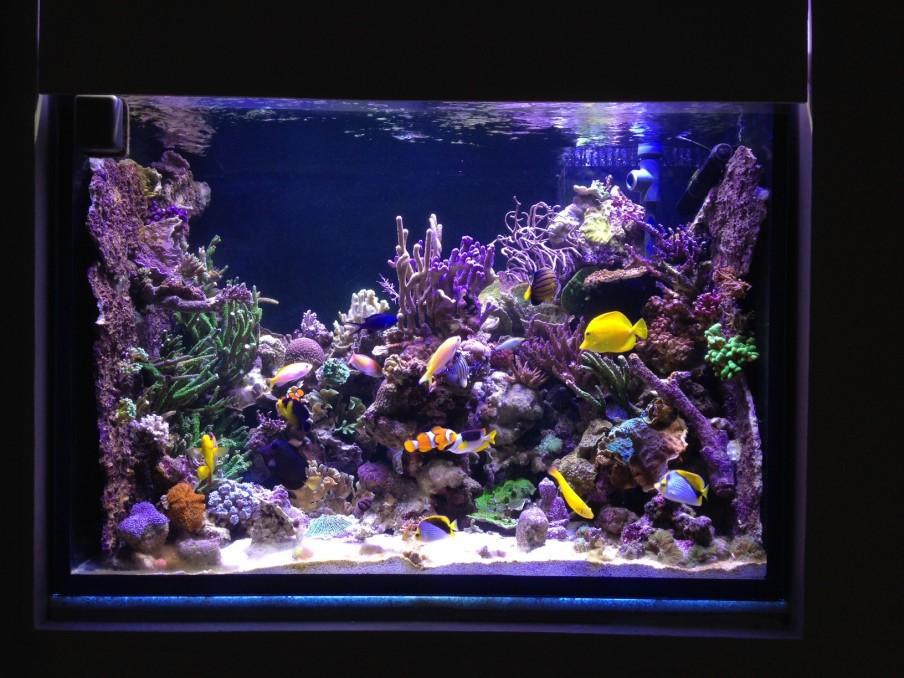 Tanne-Hoffe नई aqiarium
