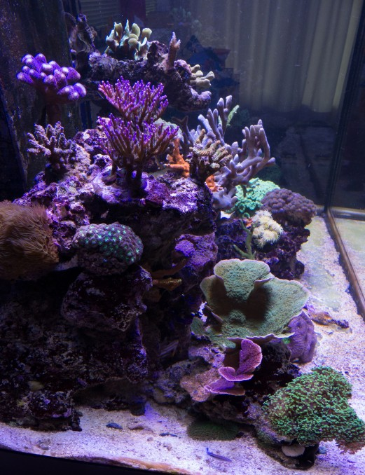 frodes-reef-aquarium étages