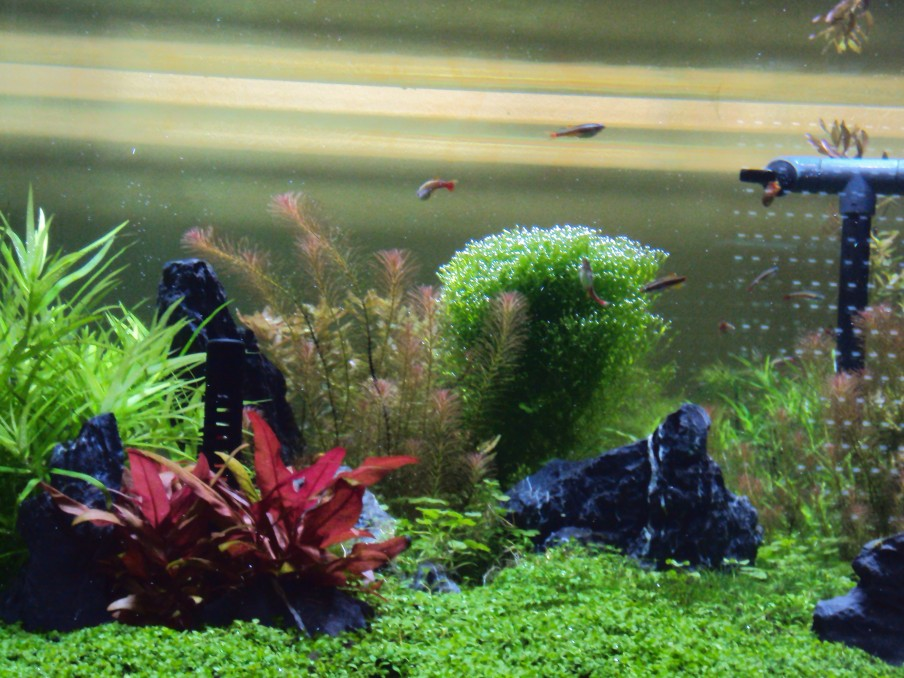 Planted aquarium LED lighting