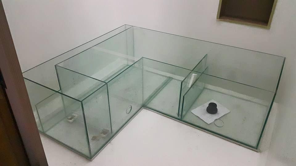 yuwono 39 s reef tank immer nah an der bef llung aquarium led beleuchtung orphek. Black Bedroom Furniture Sets. Home Design Ideas