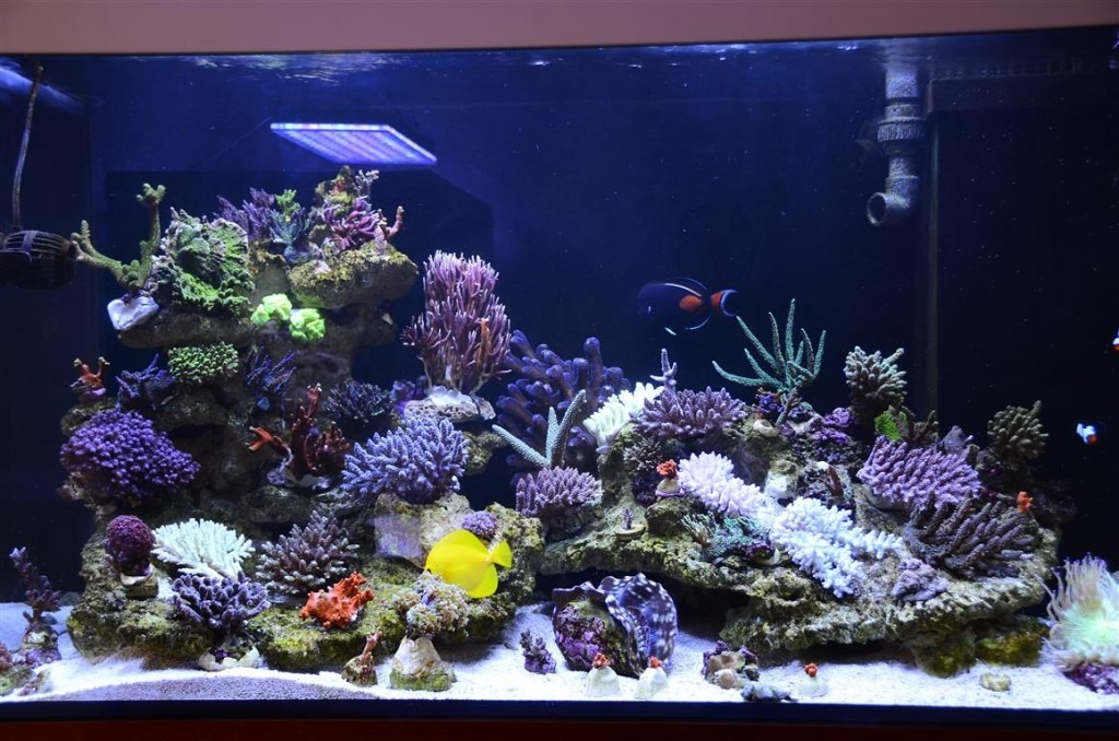 saltwater aquarium forum monthly featured nano reef. Black Bedroom Furniture Sets. Home Design Ideas