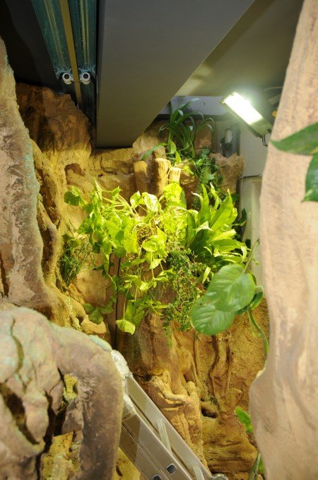 Aqua-terrariums- lighting