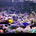 LED-Aquarium-light-Orphek-atlantik