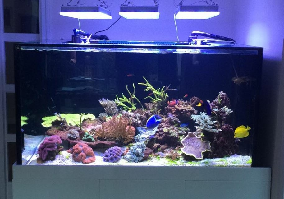 Orphek-Atlantik-v2.1b-over-reef-aquarium