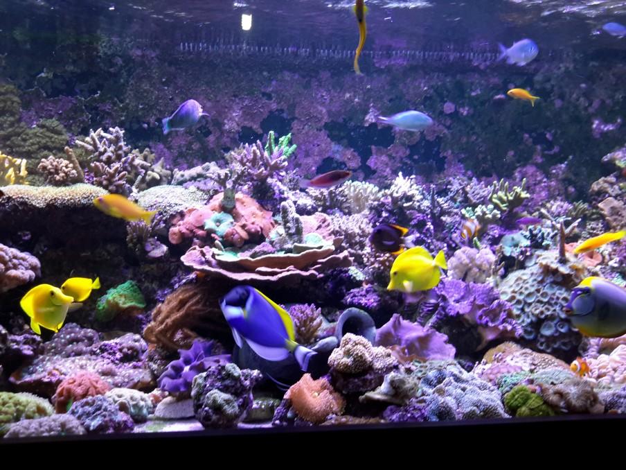 Terumbu-akuarium-Tank