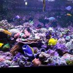 Arrecife de acuario-Tank