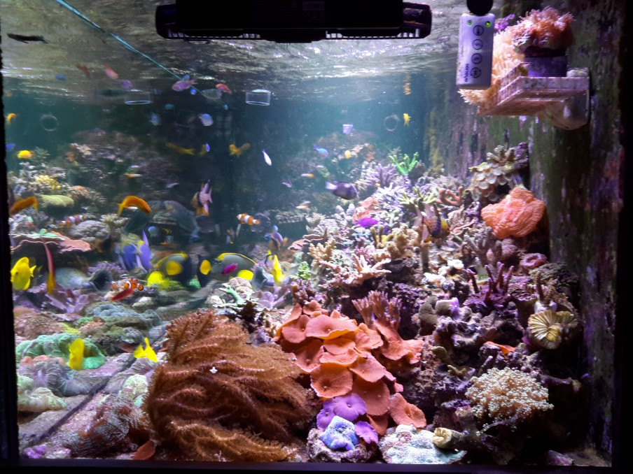 Reef-aquarium-full-tank-shot