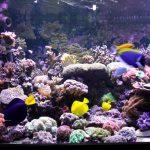 礁水族馆 - 摩西 - 以色列