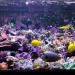 arrecife-tank-orphek-atlantik