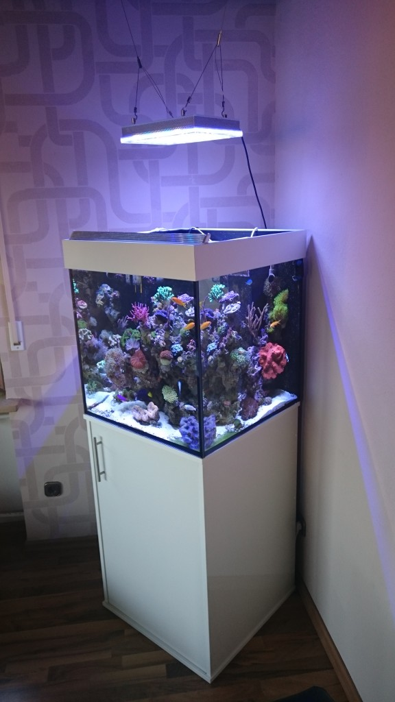24 inch-reef aquarium-germany-LED-light