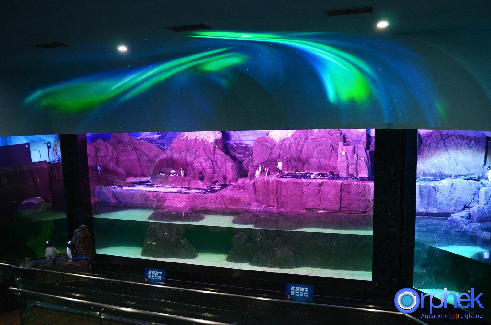 Portfolio • Orphek Aquarium LED-verlichting