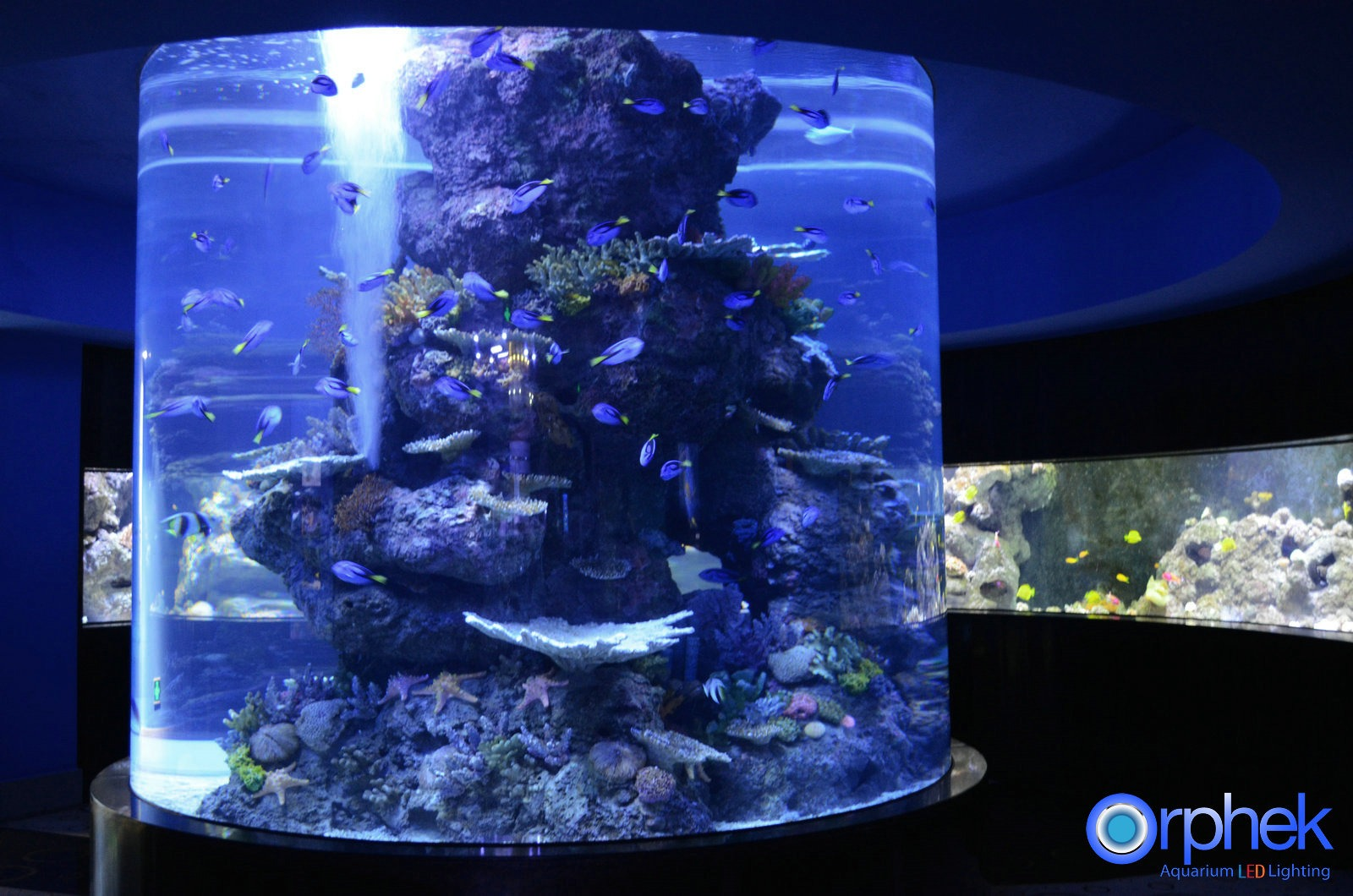 beste reef akvarium LED belysning