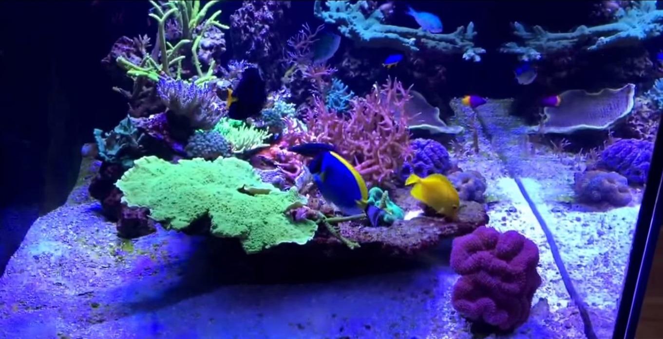 Coral Growth And Color Atlantik V2 1b Led Orphek