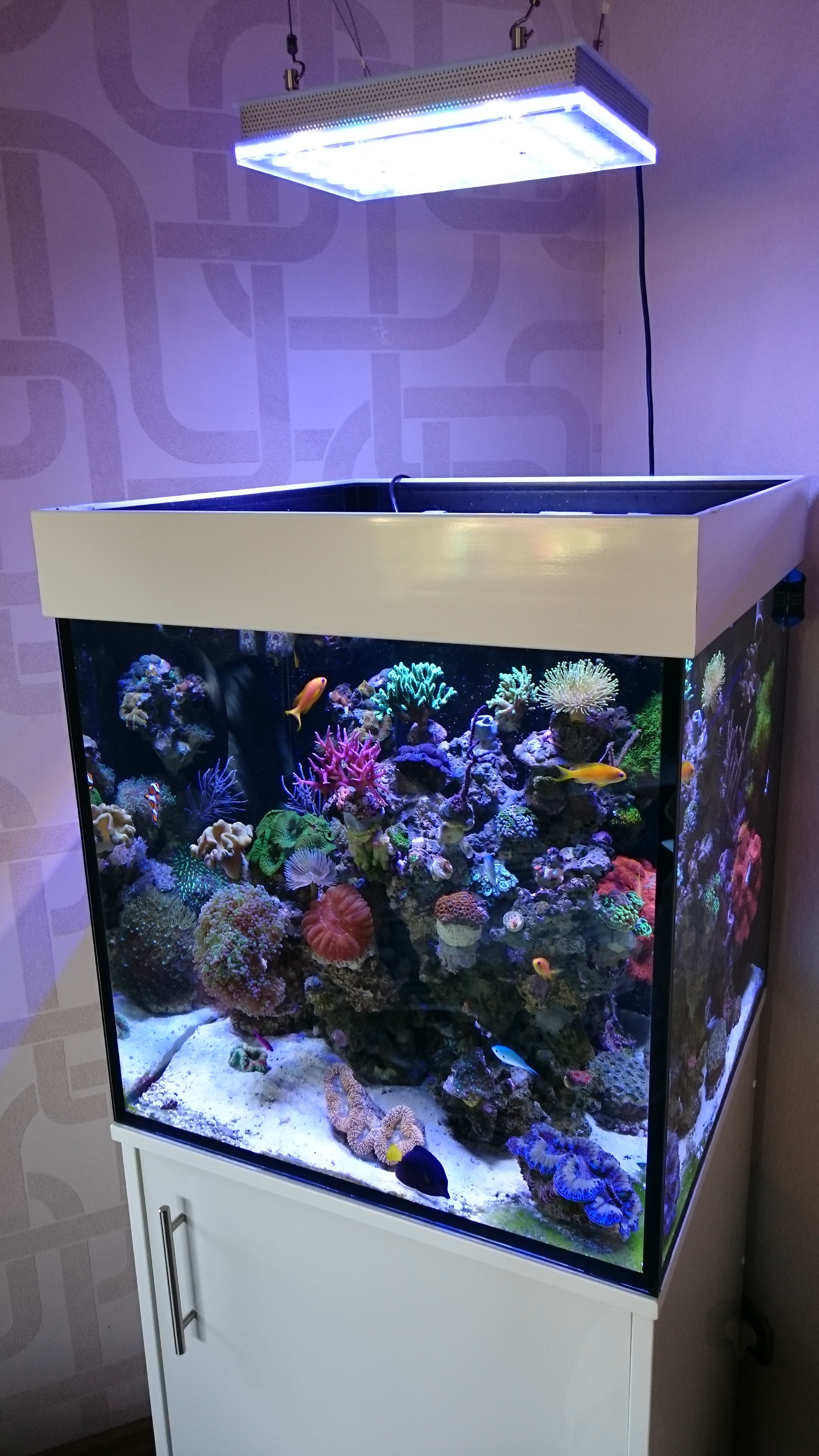 Moderne Atlantik Compact 24 inch Cube reef Aquarium • Reef Aquarium LED PW-95