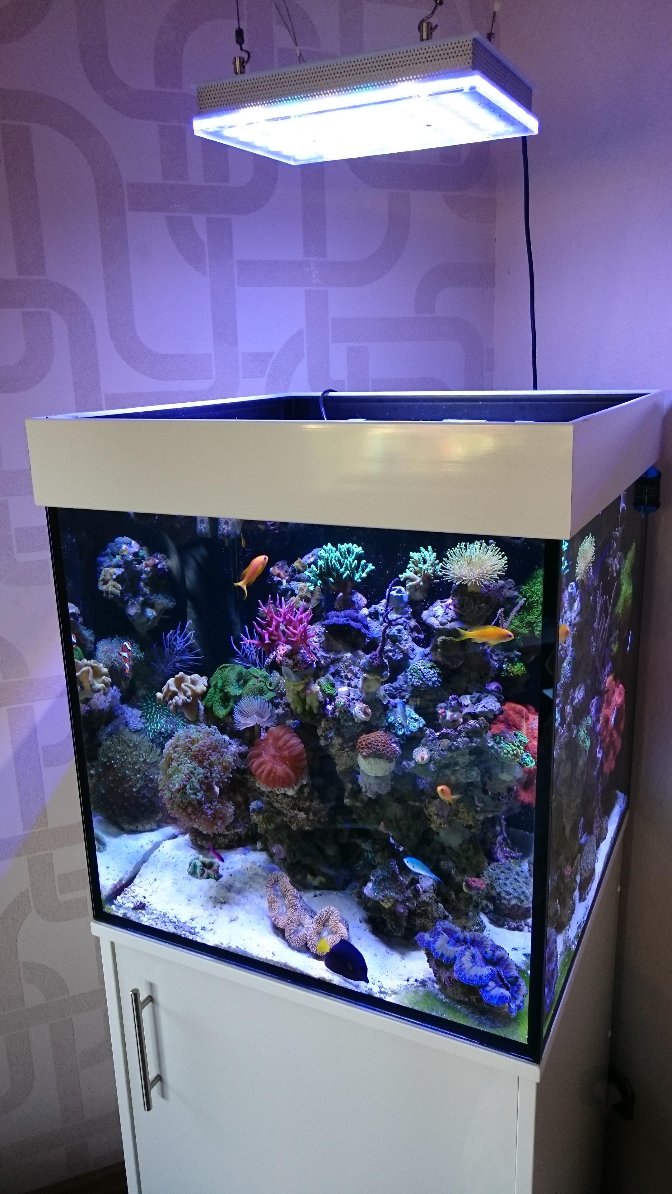 Atlantik Compact 24 Inci Cube Reef Aquarium Aquarium Led