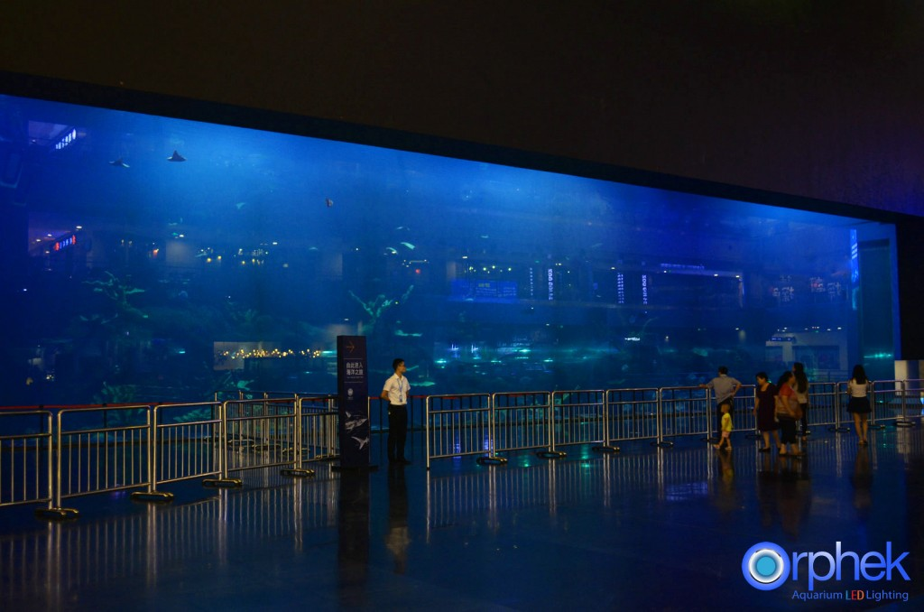 chengdu-public-aquarium-LED-lighting-Mian aquarium-19