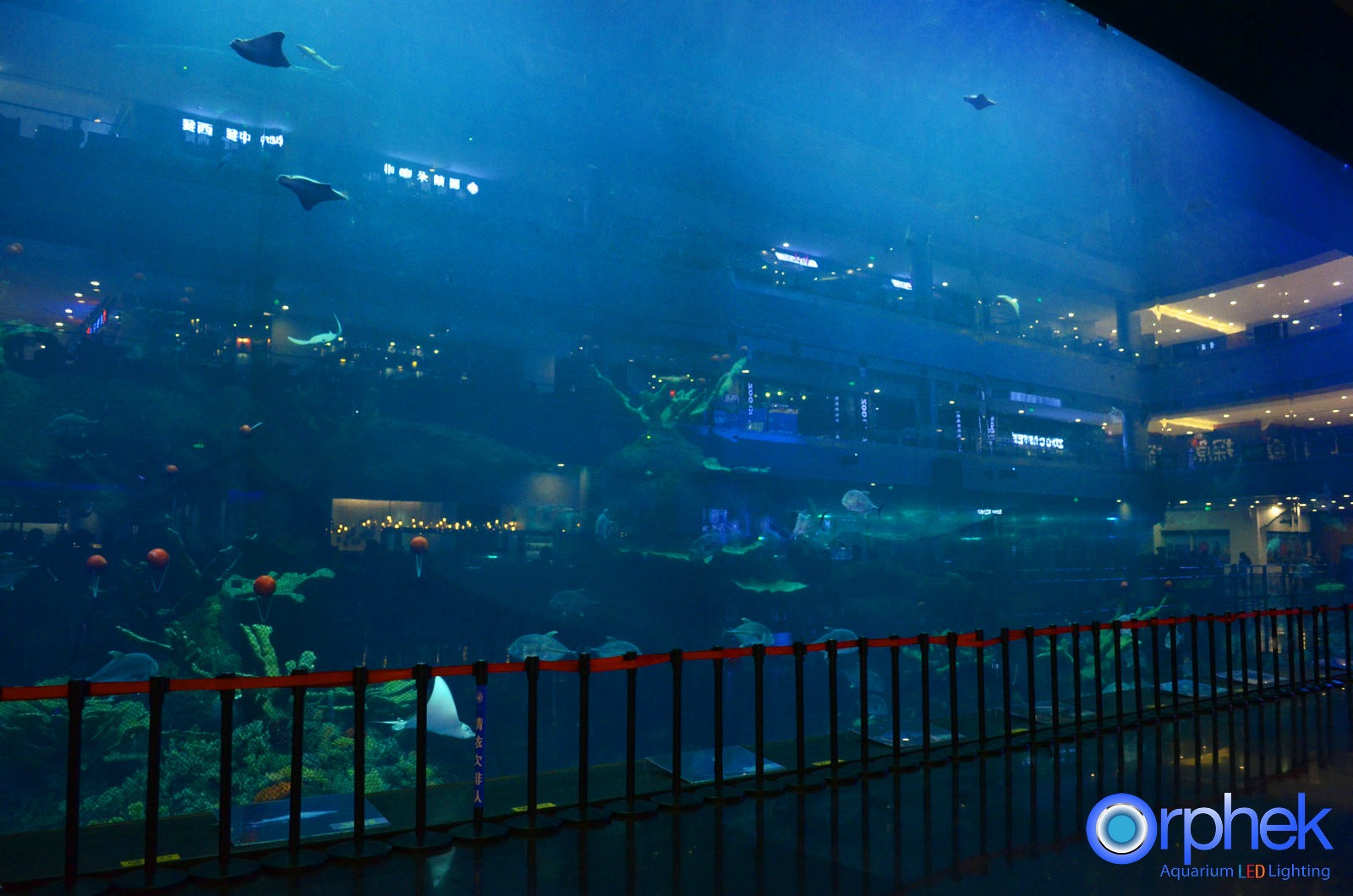 Oceanarium kostki
