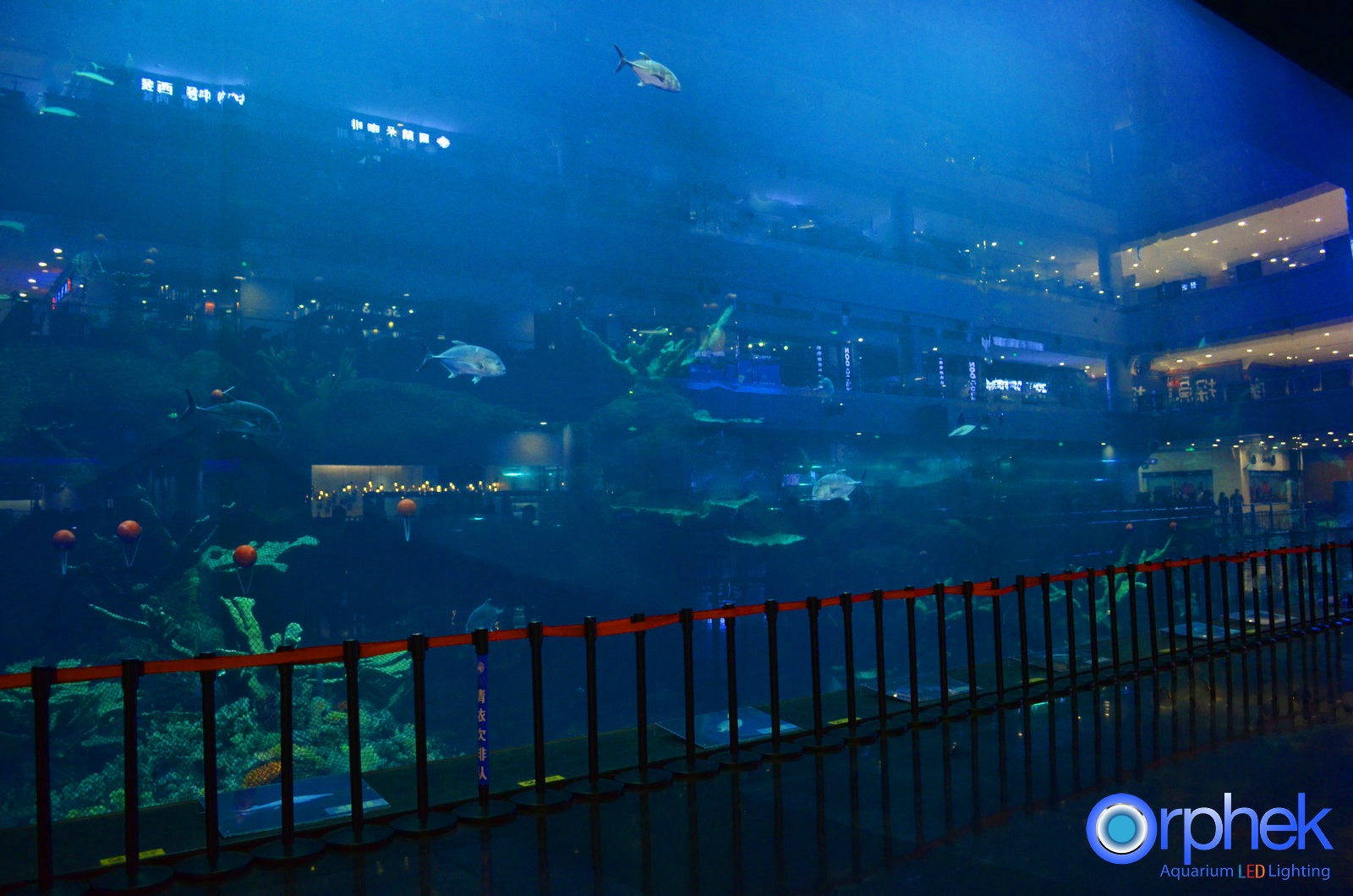 Guinness Record acquario