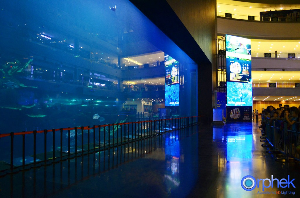 chengdu-public-aquarium-LED-lighting-Mian aquarium-23