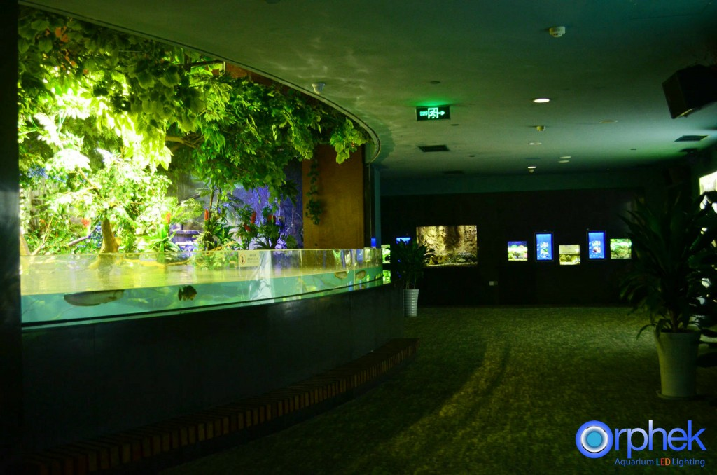 Chengdu-openbare-aquarium LED-verlichting-amazon -flooded-forest-1