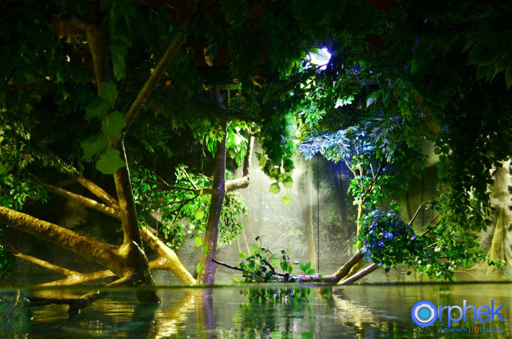 Chengdu-público-acuario-LED de iluminación de Amazon -flooded-bosque-2