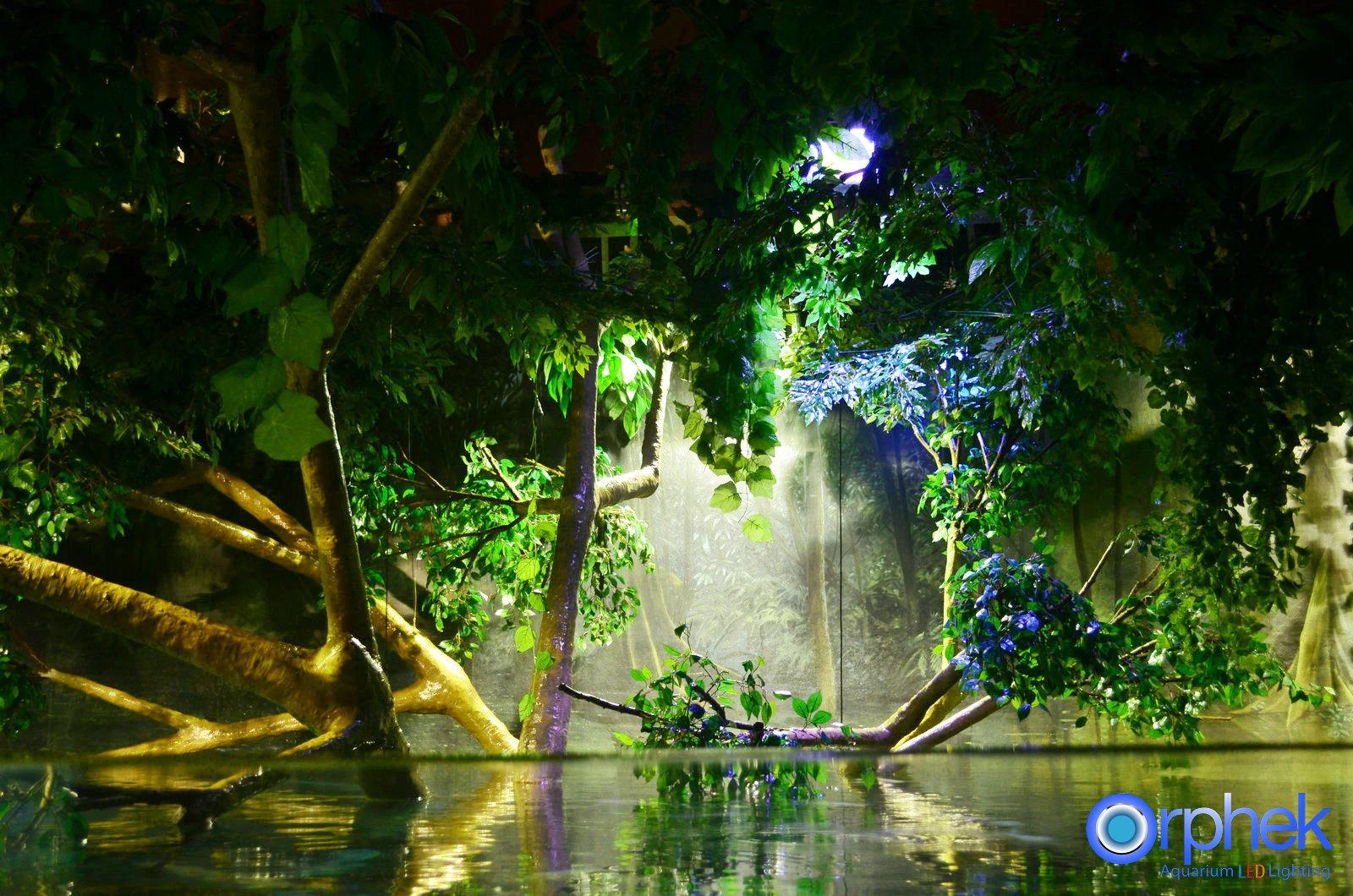 Regnskogs offentligt akvarium