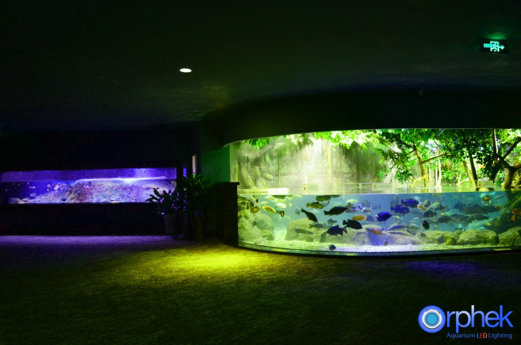 Chengdu-público-acuario-LED de iluminación de Amazon -flooded-bosque-5