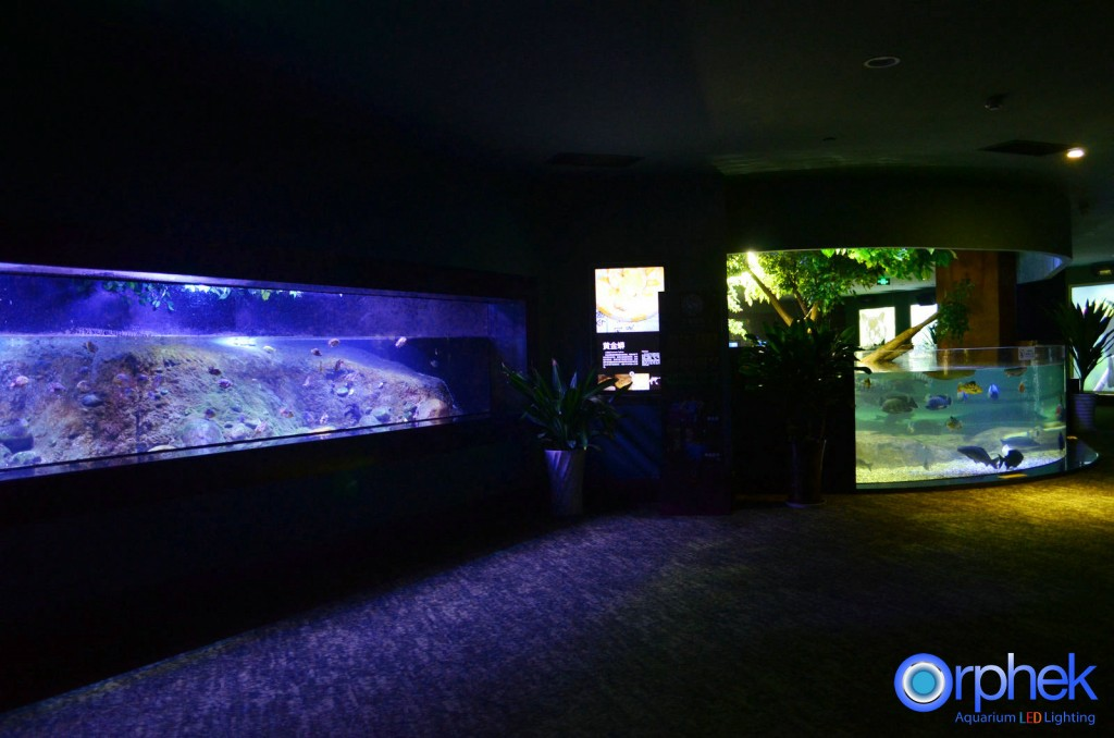 Chengdu-openbare-aquarium LED-verlichting-amazon -flooded-forest-6