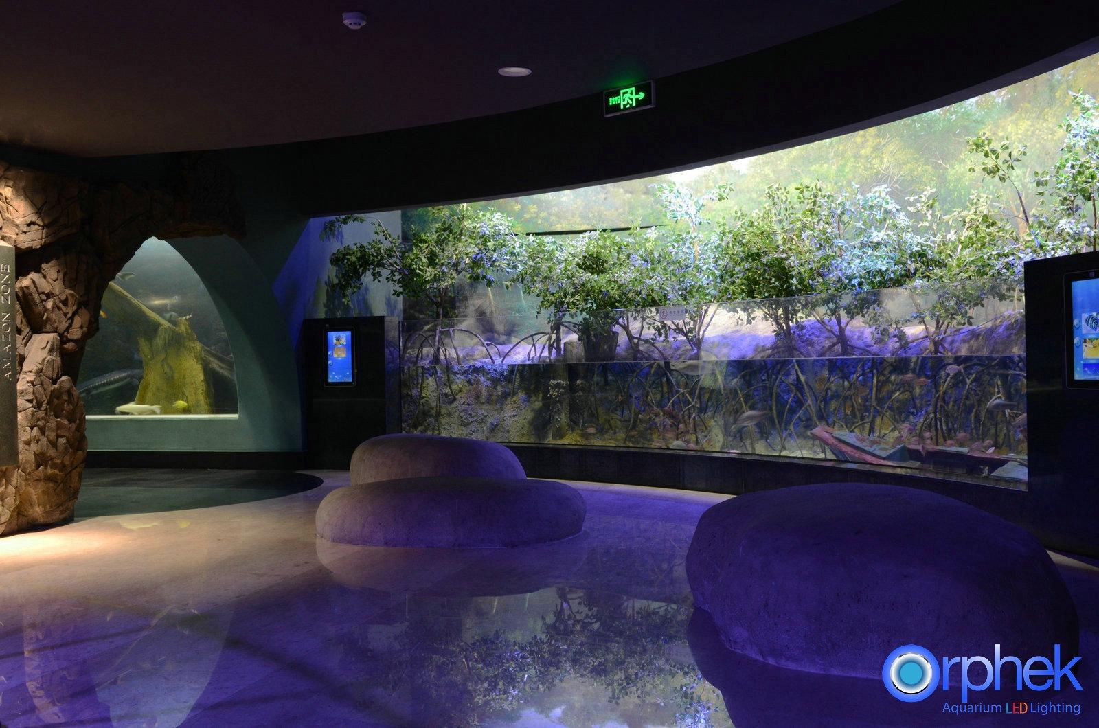 offentligt akvarium planterade