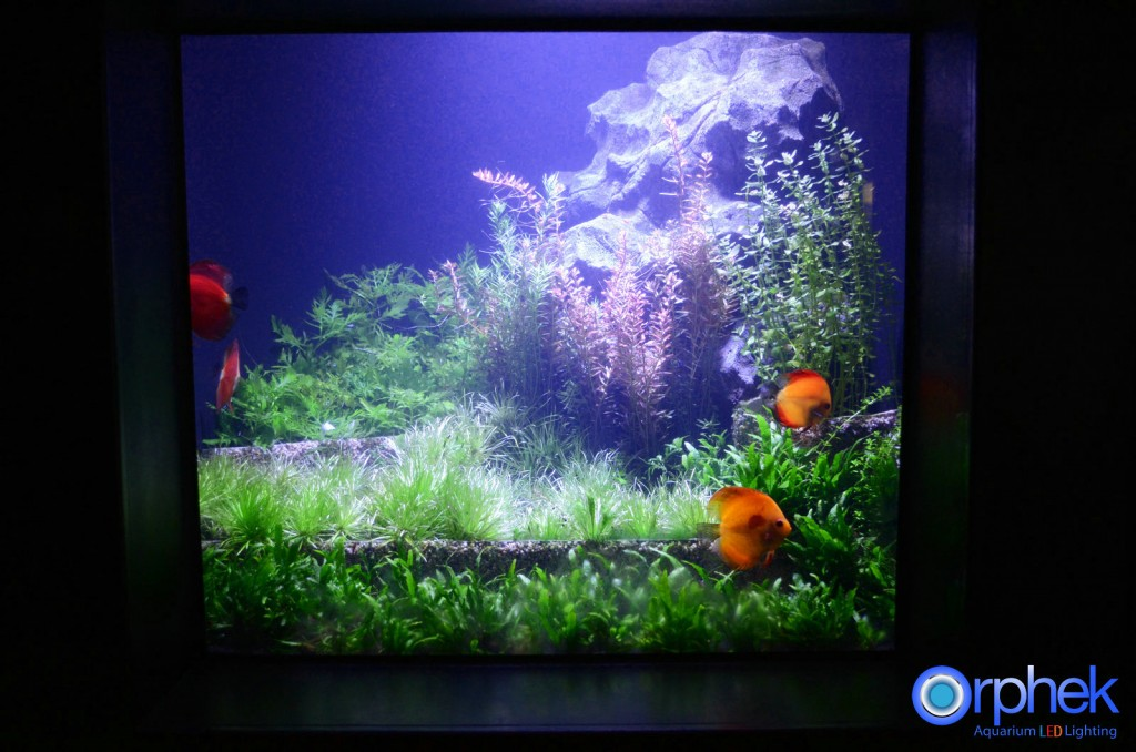 ditemokake-aquarium-discus-LED-light